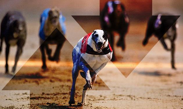 Greyhound betting system betfair cottbus vs wolfsburg betting expert soccer