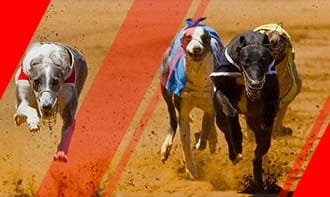 Greyhound Betting Strategy Guide: Detailed Explanation and Tips