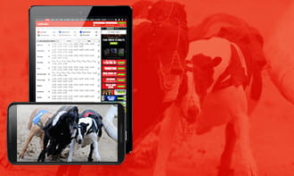 Ladbrokes Greyhound Betting Review: Streams, Offers, Odds ...
