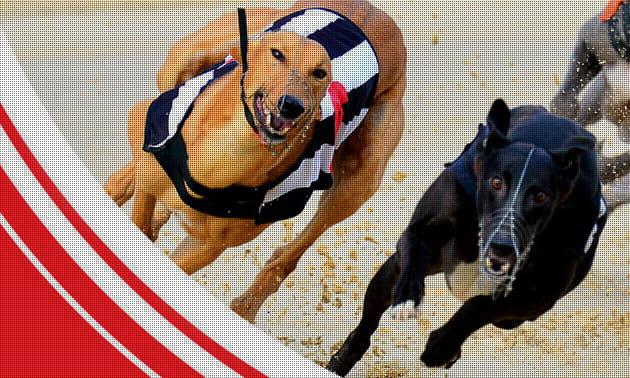 Dog racing betting options bet on wnba games