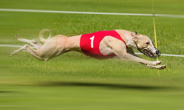 East anglian greyhound derby 2021 betting websites cowboys eagles betting