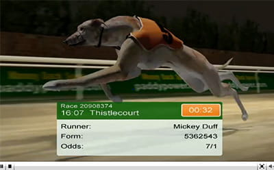 Virtual Greyhound Racing Betting Sites – The Best Guide for